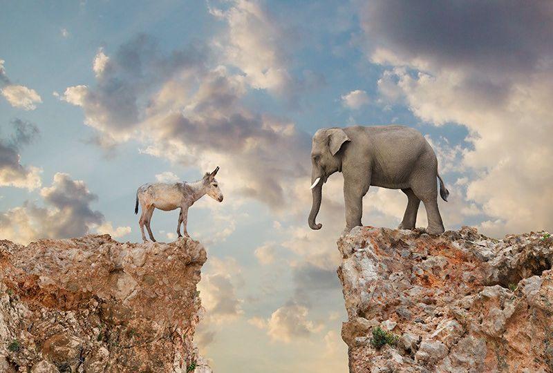donkeyelephant